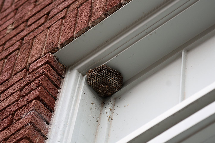 We provide a wasp nest removal service for domestic and commercial properties in City Of Westminster.